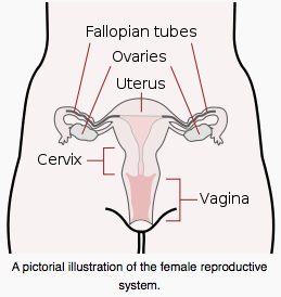 vaginal bleeding, menstruation, irregular menses, vaginal health