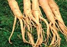 ginseng aids in increasing a woman's libido and sexual arousal